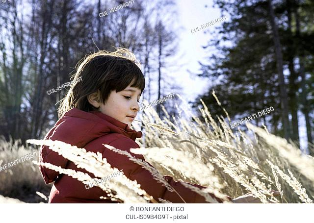 Young boy playing in tall grass
