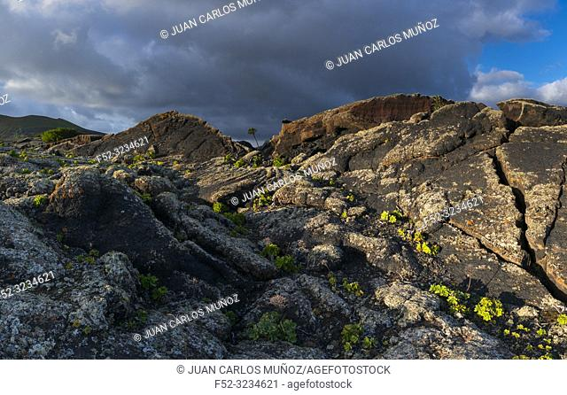 Bejeque, Lava field and lichens , La Geria, Lanzarote Island, Canary Islands, Spain, Europe