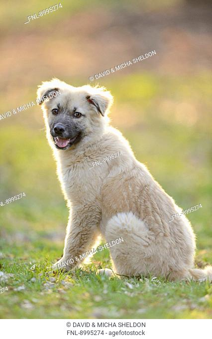 Mixed breed dog sitting