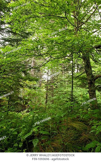 Shining Rock Wilderness Area, Pisgah National Forest, North Carolina, USA