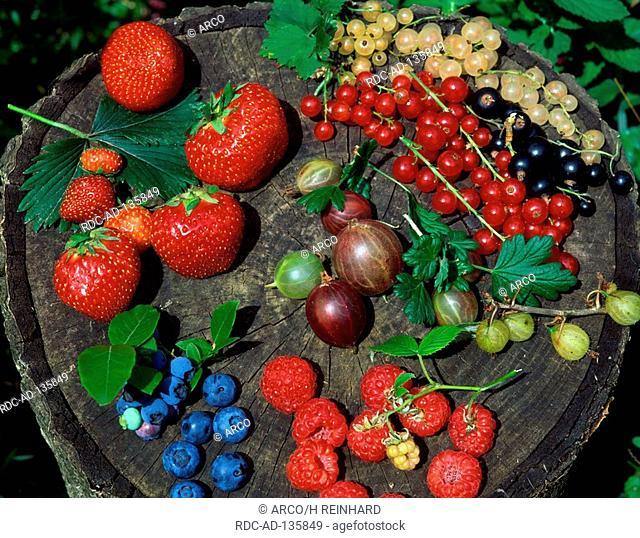 Strawberries Raspberries Gooseberries Blackthorn berries Black Currants and Red Currants
