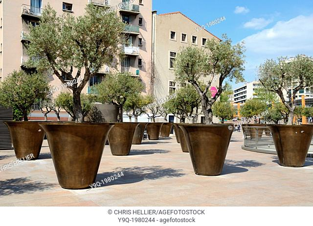 Giant Planters & Olive Trees near the Town Hall Marseille France