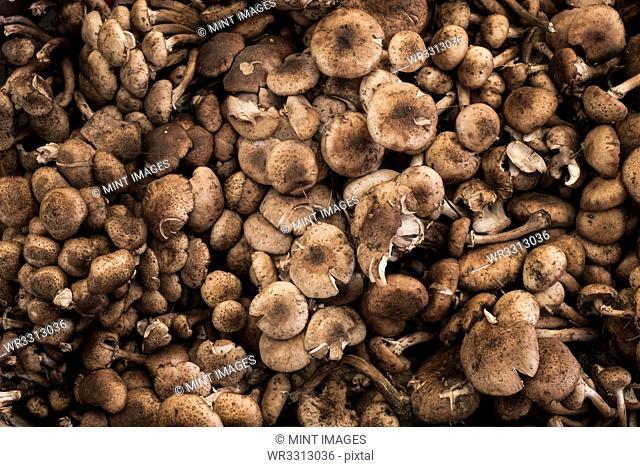 High angle close up of fresh mushrooms at a market stall