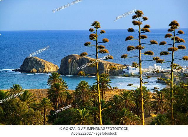Typical flora, Cabo de Gata - Nijar Natural Park, Almeria province, Andalucia, Spain