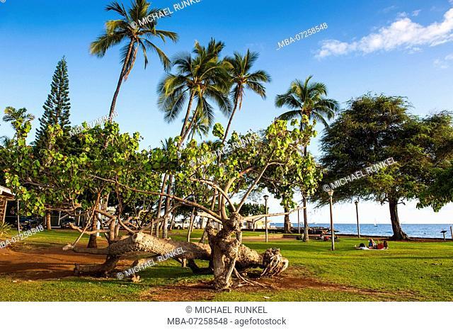 Park on the cost of Lahaina, Maui, Hawaii