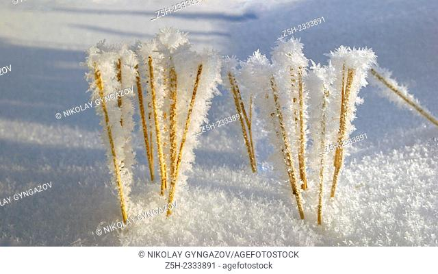 Snowy expanses of Siberia