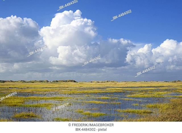 Salt marshes with flooding tide and withdrawing cumulus clouds (cumulus), Sankt Peter-Ording, Schleswig-Holstein Wadden Sea National Park, North Frisia