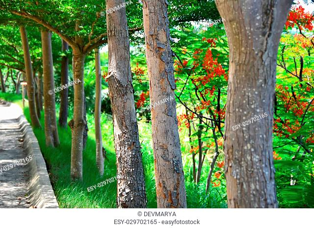 Trees in the Garden with red flowers