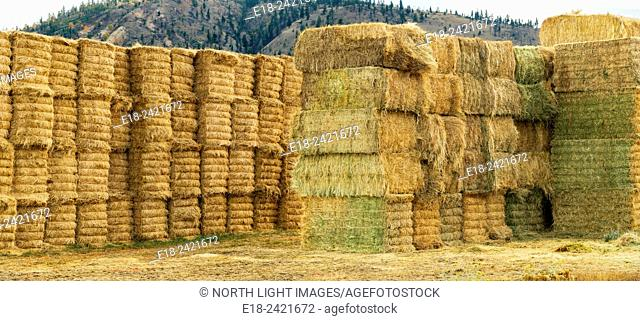 Canada, BC, Ashcroft. Bails of hay piled up to dry on a cattle ranch in the BC interior