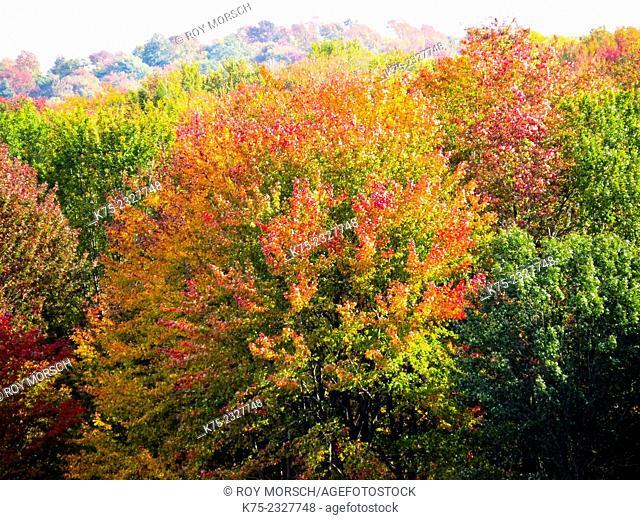 autumn foliage. Pocono Región, Pennsylvania, USA