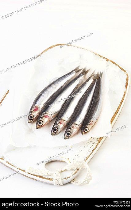 anchoas frescas / fresh anchovies