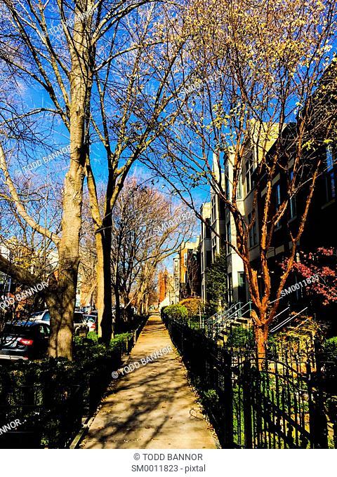 Residential street, Lincoln Park Neighborhood. Chicago, Illinois