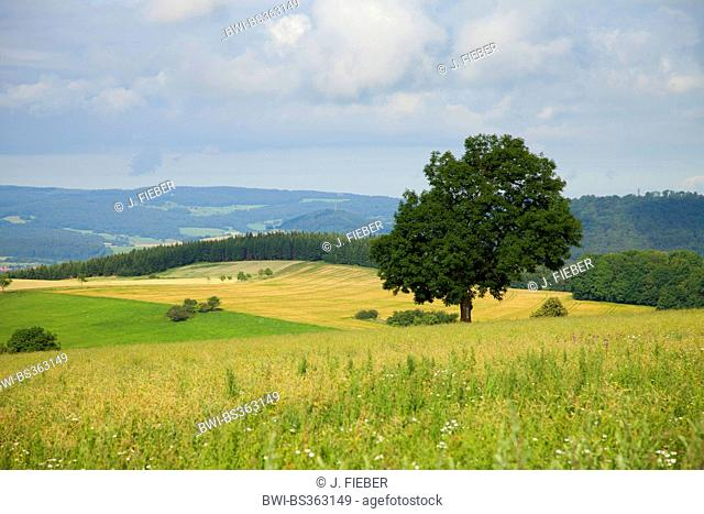 low mountains landscape of Rhoen, Germany, Thueringen, Rhoen, Hohe Geba