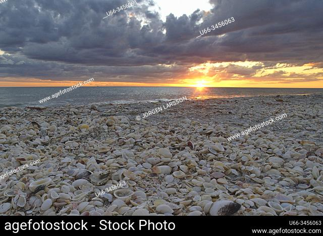 Sea shells, Sanibel, Florida, USA