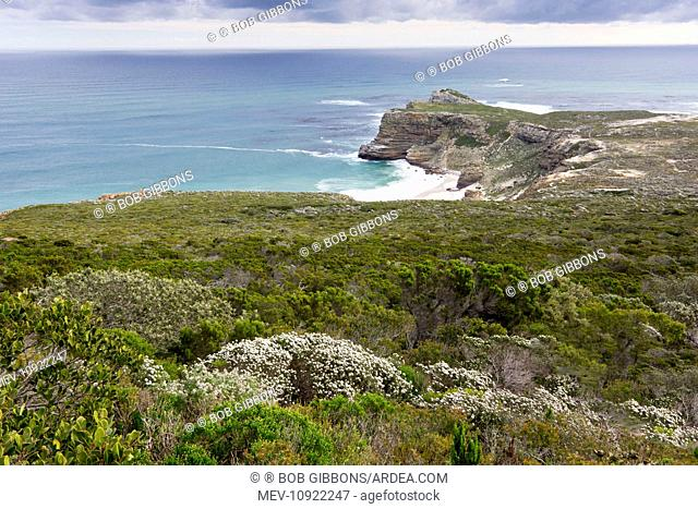 Cape of Good Hope. with wind-blown fynbos - view from Cape Point, Table Mountain National Park, South Africa