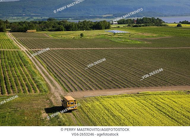 High angle view of an agricultural crop field and yellow school buses in summer, Saint-Francois, Ile d'Orleans, Quebec, Canada