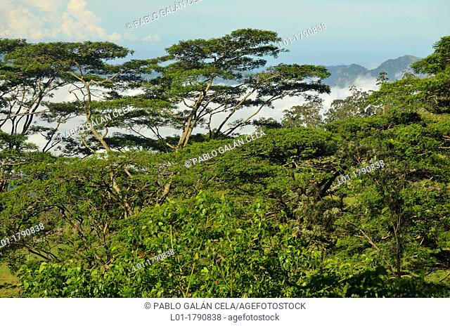 Knucles mountains Heritage and Wilderness area Sri Lanka