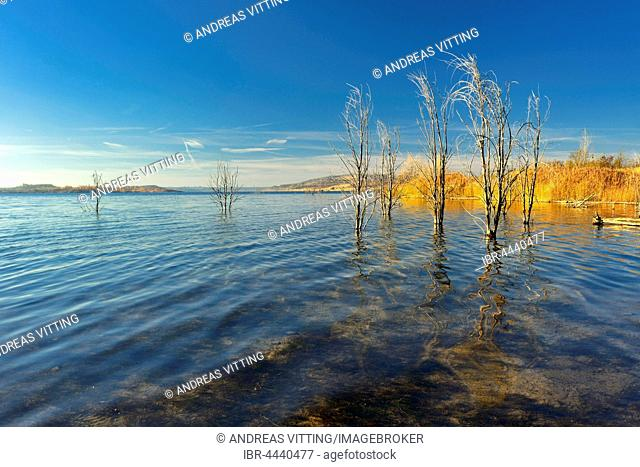 Geiseltalsee in autumn with dead trees in water, lake from reclaimed mining land, Mücheln, Saxony-Anhalt, Germany