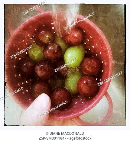 Washing red and green grapes in a small colander