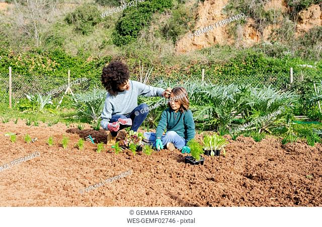 Mother and son planting lettuce seedlings in vegetable garden
