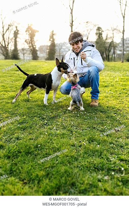 Young man playing with his dogs on a meadow