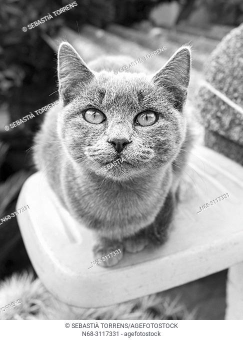 Young cat at Sa Pobla, Majorca, Balearic Islands, Spain