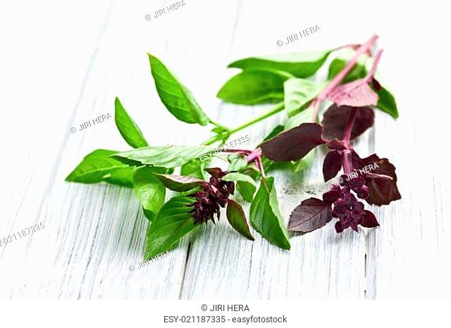 varied basil leaves