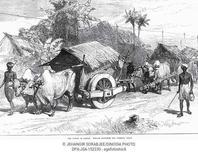 General view The Famine In Bengal Bullock Hackeries for carrying grain , West Bengal , India