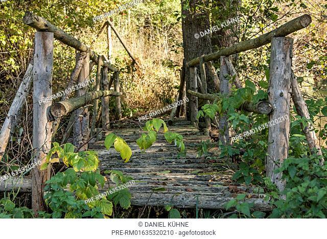 Walking track with wooden bridge, Harz District, Harz, Saxony-Anhalt, Germany / Wanderweg mit Holzbrücke, Landkreis Harz, Harz, Sachsen-Anhalt, Deutschland