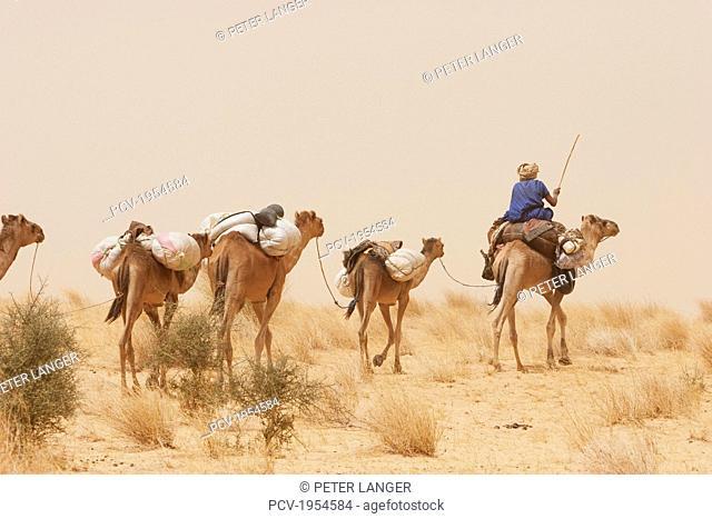 Tuareg camel caravan near Timbuktu, Mali