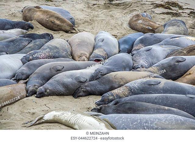 sleeping sealions at the beach in San Simeon