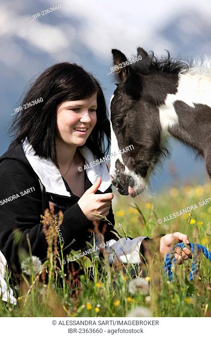 Young woman with a Gypsy Vanner or Tinker horse foal on a meadow, pinto, black and white, North Tyrol, Austria, Europe