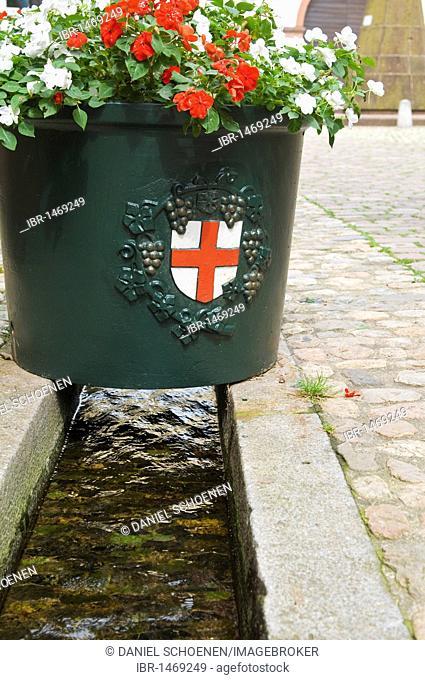 Crest of Freiburg above a Baechle or small canal, Freiburg im Breisgau, Baden-Wuerttemberg, Germany, Europe