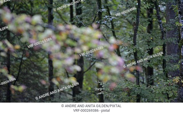 Autumn forest with a branch on foreground, rack focus