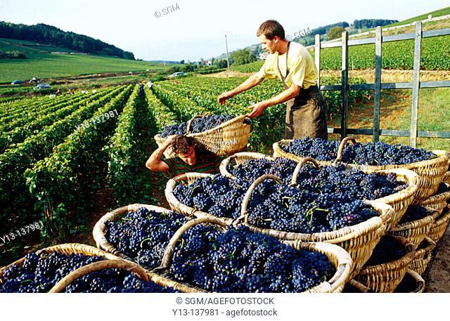 Vintage. Burgundy. France
