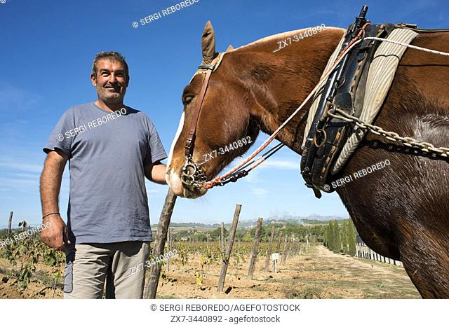 Animal traction in the vineyards. Vineyards of Raventos winery industry. Sant Sadurni d'Anoia, San Sadurni de Noya. Winery building. Catalonia Spain