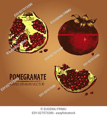 Digital vector detailed color pomegranate hand drawn retro illustration collection set. Thin artistic linear pencil outline