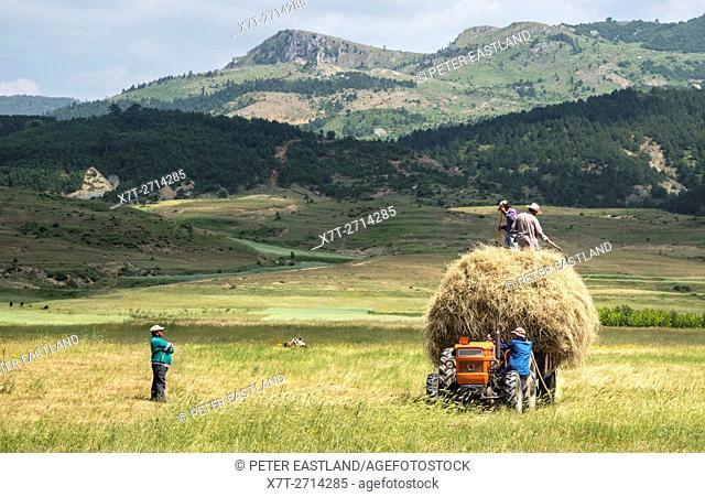Farmers gathering hay near Korca, in southeastern Albania,