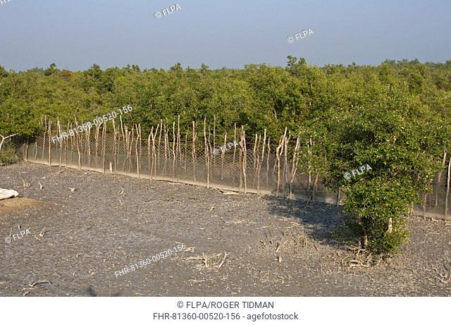 Fence to protect villagers from man-eating tigers, Sundarbans, Ganges Delta, West Bengal, India, March