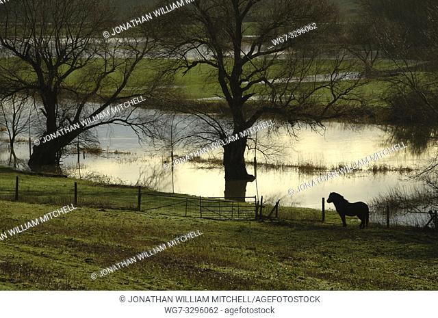 UK Near Olney -- 05 Jan 2014 -- A sodden Shetland Pony above the Great River Ouse near Olney in Buckinghamshire England UK after several severe storms caused...