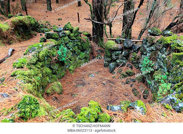 La Palma, Canary Island, Landscape in the National Park Refugio de El Pinar, archaeological site, Lomo de las Casas and Los Corrales or Barranco de las Ovejas