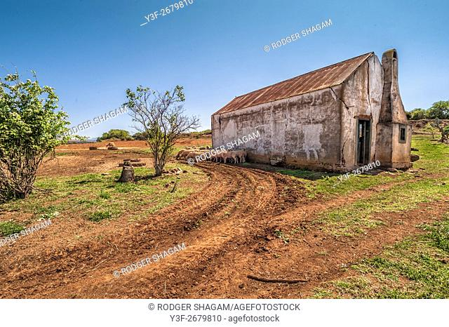 Old barn on a dirt road with sheep resting in the shade on a hot summer's day. Western Cape Province, South Africa