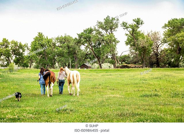 Rear view of young woman and her sister leading horses in field, Bridger, Montana, USA