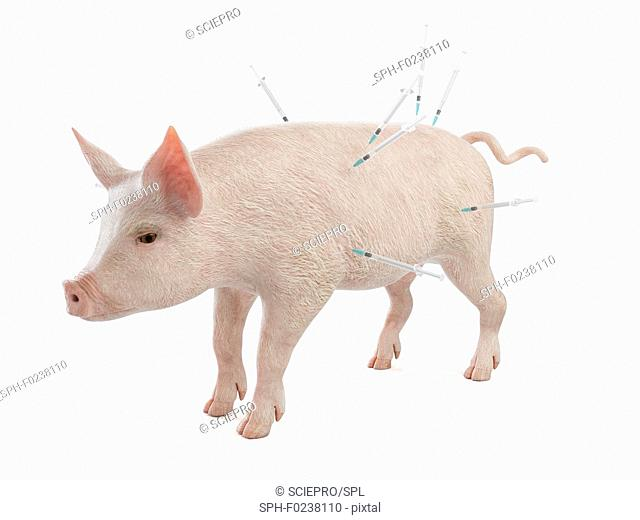 Illustration of syringes stuck in a pig