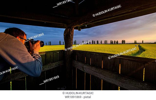 Man on lookout tower taking picture of colza field, Tuscany, Italy