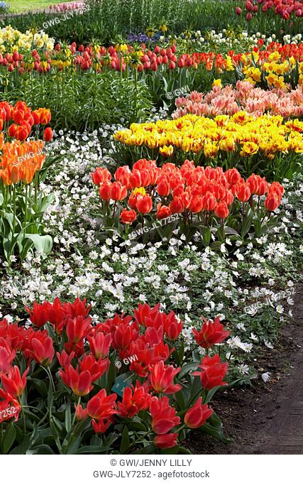 MIXED TULIPS AT KEUKENHOF GARDENS