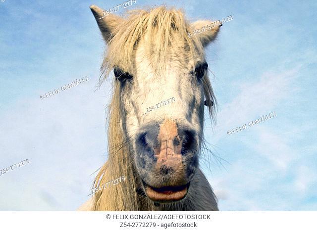 Pony Head, Asturias, Spain