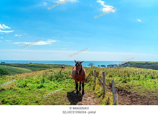 Horse in Kiritappu, Hokkaido, Japan