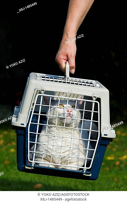 Cage for transporting cats