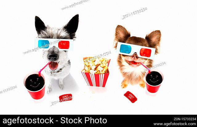 chihuahua poodle dog going to the movies with soda and glasses and popcorn and tickets, isolated on white background and 3d glases